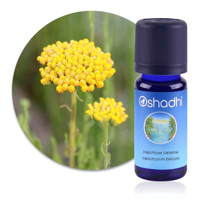 Hélichryse italienne extra - Helichrysum ital. serot. G.D / Sauvage Biologique